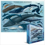 EUROGRAPHICS 6000-0082 WHALES & DOLPHINS