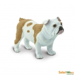 SAFARI 250729 BULLDOG