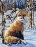 COLART 86241 FOX ON EDGE OF CORNFIELD ACRYLIC PAINT BY NUMBER (9 PULGX12 PULG)