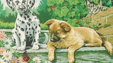 COLART 86281 TWO DOGS (PUPPIES) LOOK WHO IS WATCHING ACRYLIC PAINT BY NUMBER (9 PULGX12 PULG)