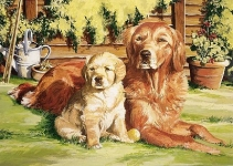 COLART 86294 DOGS LIFE (RETRIEVER & PUP) ACRYLIC PAINT BY NUMBER (11.5 PULGX15.5 PULG)
