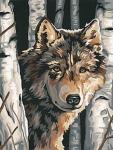 DIMENSIONS 91325 WOLF AMONG BIRCHES PAINT BY NUMBER (9 PULGX12 PULG)