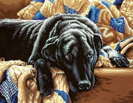 DIMENSIONS 91469 GUILTY PLEASURES (BLACK LABRADOR LYING ON SOFA) PAINT BY NUMBER (14 PULGX11 PULG)